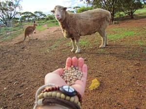 Sheepie and Matilda